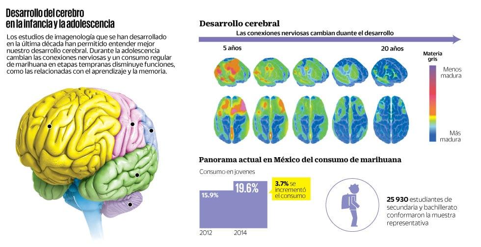 Qu pasa en el cerebro de un adolescente