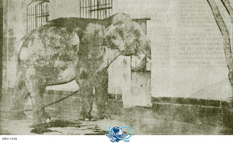 Resultado de imagen para fotos de la estación de trenes de buenavista con los elefantes recién llegados