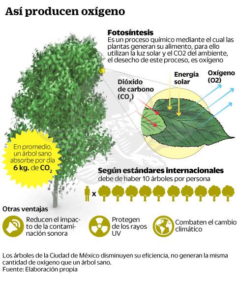 Agonizan los rboles por la contaminaci n for Cuanto mide un arbol